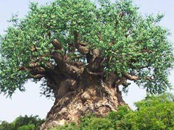 Rekortmen Ağaçlar