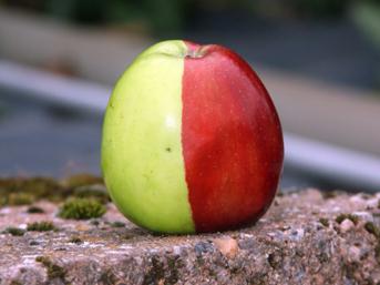 Milyonda bir: Hem kırmızı hem yeşil elma
